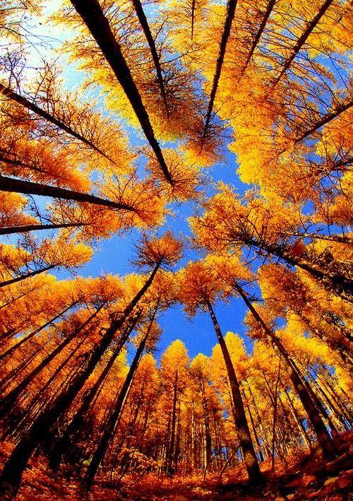 Autumn health and wellness